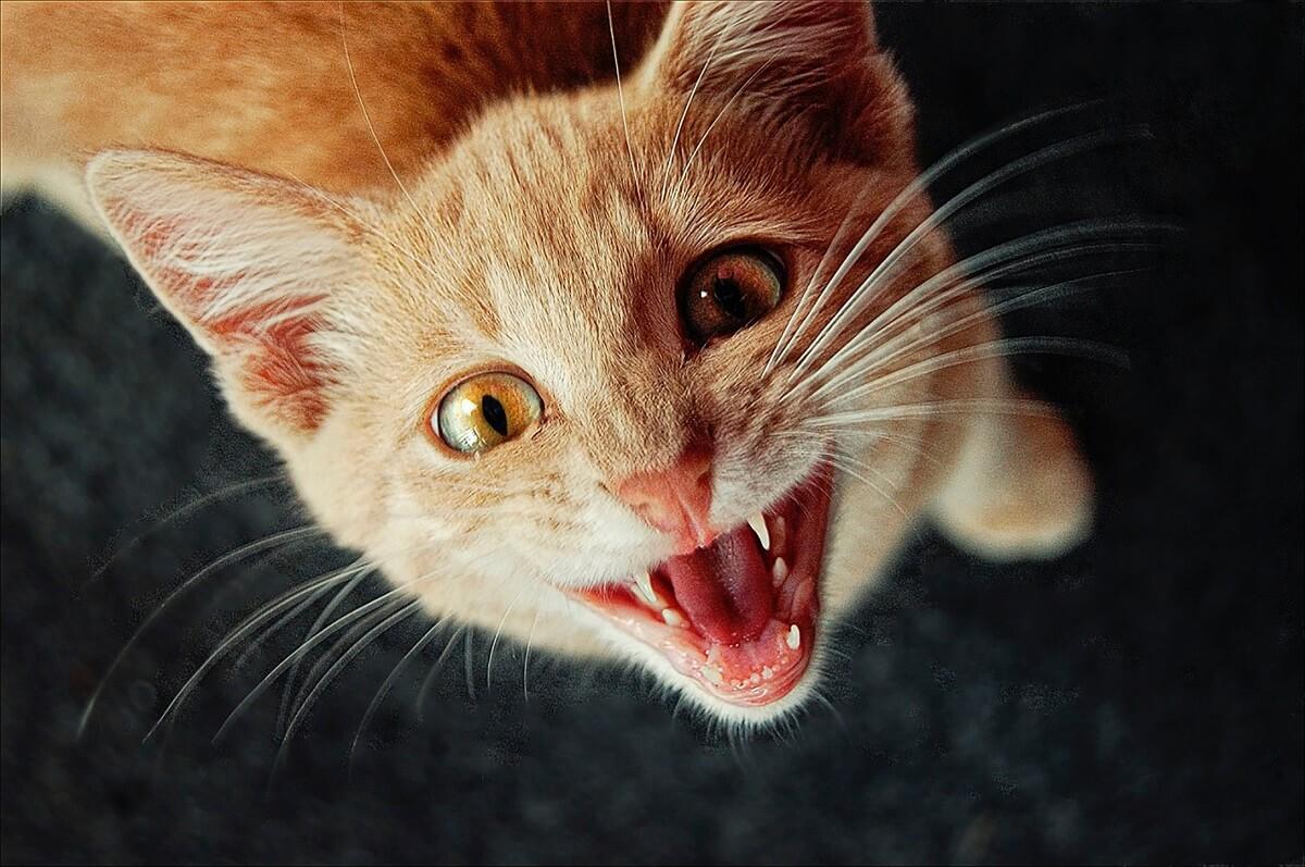 5 דברים שלא ידעתם על החתול שלכם
