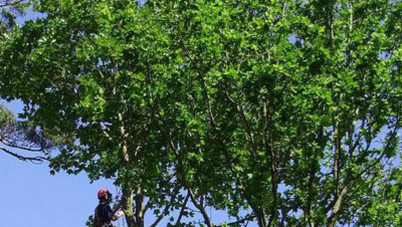 טיפים חשובים לגיזום וכריתת עצים