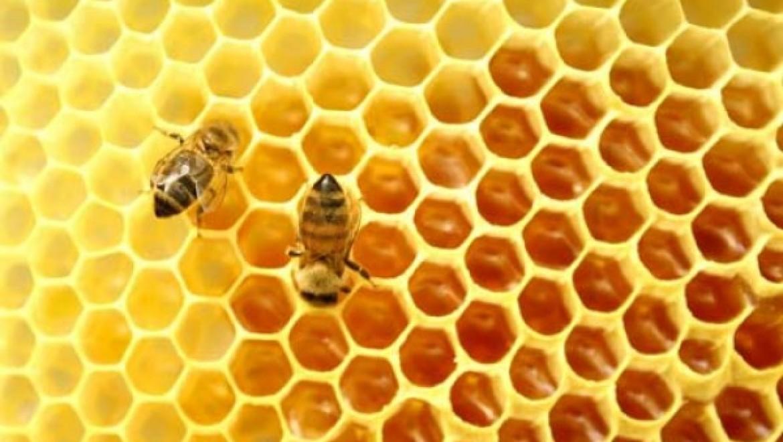 ריפוי בעזרת ארס ועקיצות מכוונות של דבורים